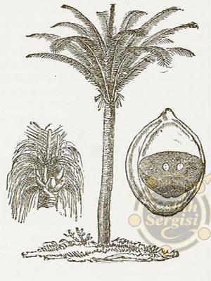 Kuka Palmiyesi